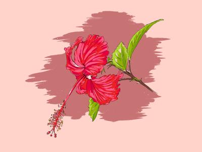 Puerto Rico botanicals