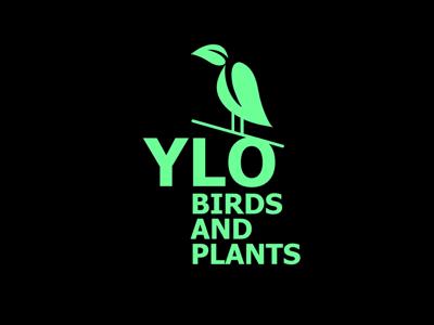 YLO logo