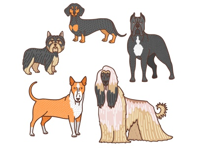 Dogs 2 procreate dachshund cane corso afghan hound bull terrier yorkie animal pet dog dogs doodle graphic vector illustrator hand-drawn