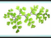 Fern Leaf Illustration