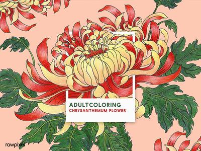 66 Pantone - Chrysanthemum Flower