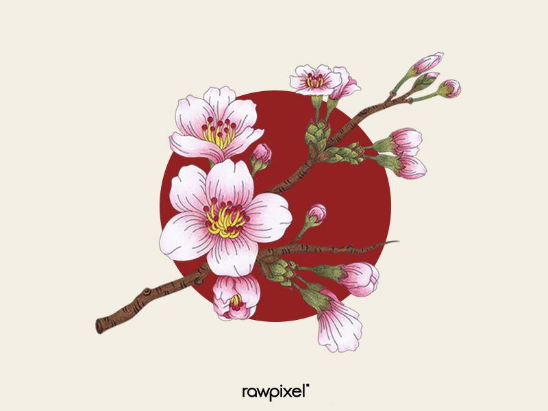 75 Pantone - Sakura Cherry Blossoms by mano t for rawpixel