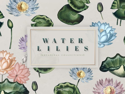 Water Lilies : Elements