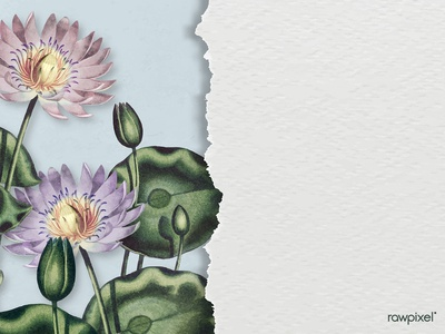 Water Lilies : Background