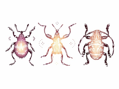 Bugly tribal markings pattern design color colour pattern decorative biology insects illustration scientific illustration bugs