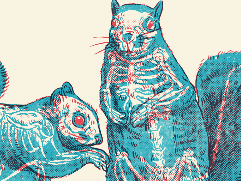 Squirrels design gig poster xray creature drawing monsters illustration