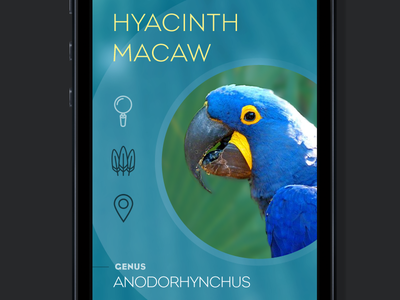 Hyacinth Macaw macaw mobile icons blue