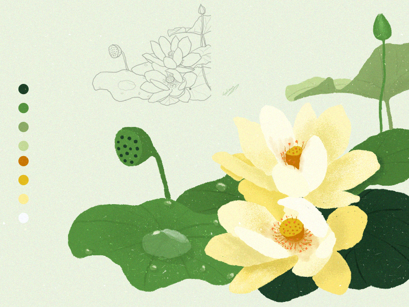 practice_painting flower_2 ps手绘插画 ps插画