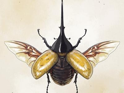 Beetle-ing fun insect bug beetles yellow memory game memorycards beetle rikoandthehuman
