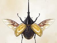 Beetle-ing