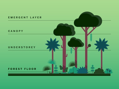 Layers of the Rainforest kidlit illustrator illustration botanical forest plant illustration vector educational education layers of the rainforest green plants trees rainforest diagram chart