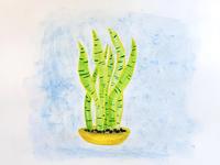 Plantie #2