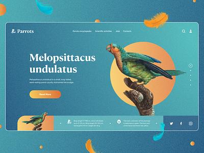 Parrot Encyclopedia website birds service colors knowledge education encyclopedia parrot webdesign landing website style ux concept design ui