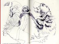 bestiary: andean condor