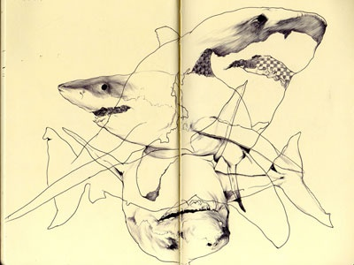 bestiary: great white shark bestiary great white shark drawing