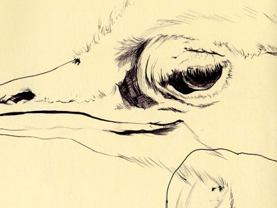 bestiary: greater rhea rhea greater drawing bestiary