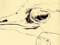 bestiary: greater rhea