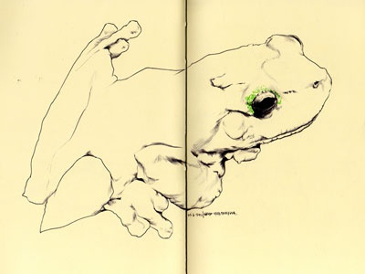 bestiary: green-eyed tree frog drawing frog tree eyed green bestiary