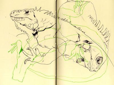 Bestiary: green iguana