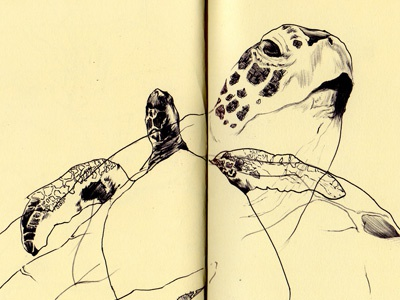 bestiary: green sea turtle turtle sea green drawing bestiary