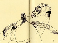 bestiary: green sea turtle