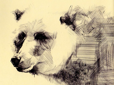Bestiary: grizzly bear bear grizzly drawing bestiary