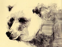 Bestiary: grizzly bear