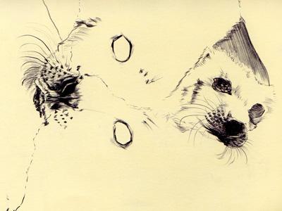 bestiary: harp seal