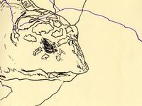 bestiary: hawksbill sea turtle