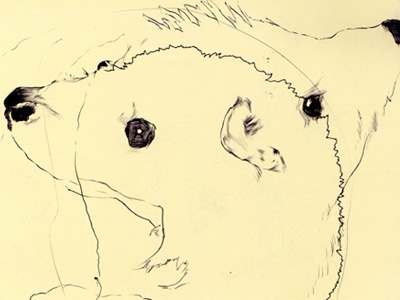 bestiary: hedgehog