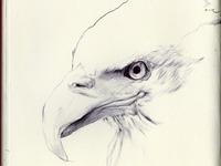 bestiary: bald eagle