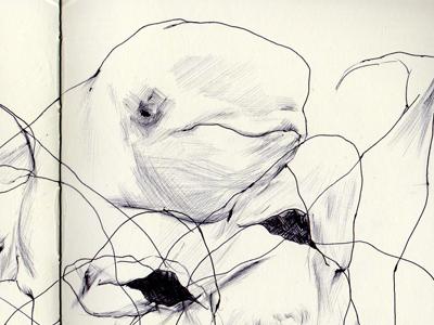 bestiary:beluga whale