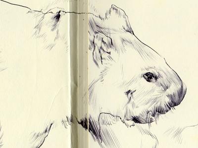 Bestiary.commonwombat