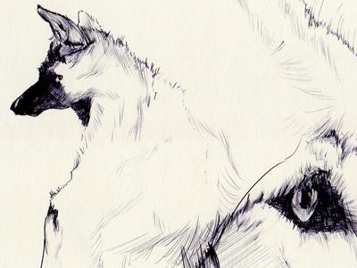 Bestiary.coyote