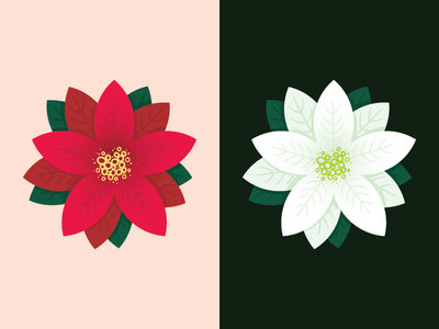 tis the season vector illustration christmas poinsettia