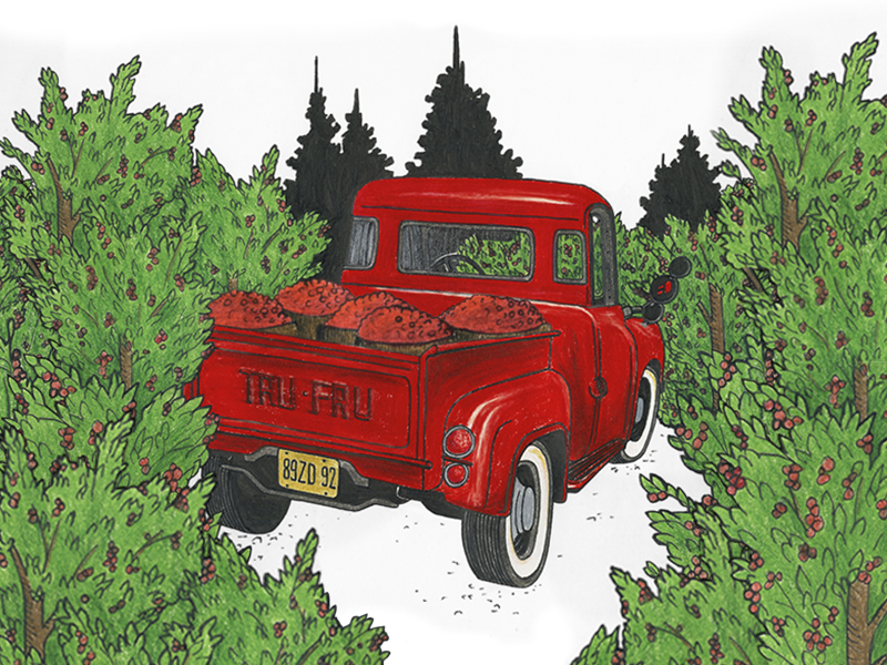 Cherry Truck fresh farmers market farm vintage cherry truck fruit illustration