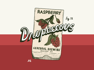Drupaceous illustration seeds label design brewery beer raspberry vintage lettering