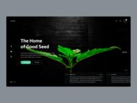 Cannabis Shop Intro