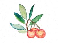 Arbutus Strawberries