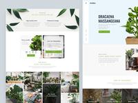 Ocolus Plant - Multi Purposes Woocommerce Theme