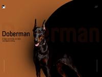 Doberman website