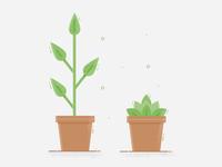 Succulentes & plants