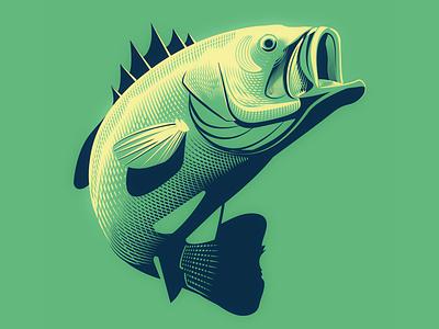 Large Mouth Bass florida fish vector hatching fish bass fishing fishing