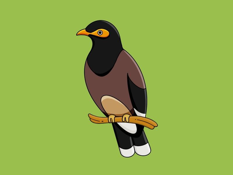 Mynah vector bird bird illustration birds procreate illustration
