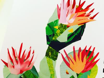 Cacti Collage