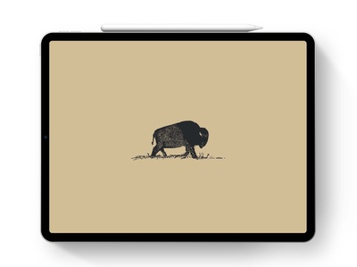 Bison Sketch | iPad Pro