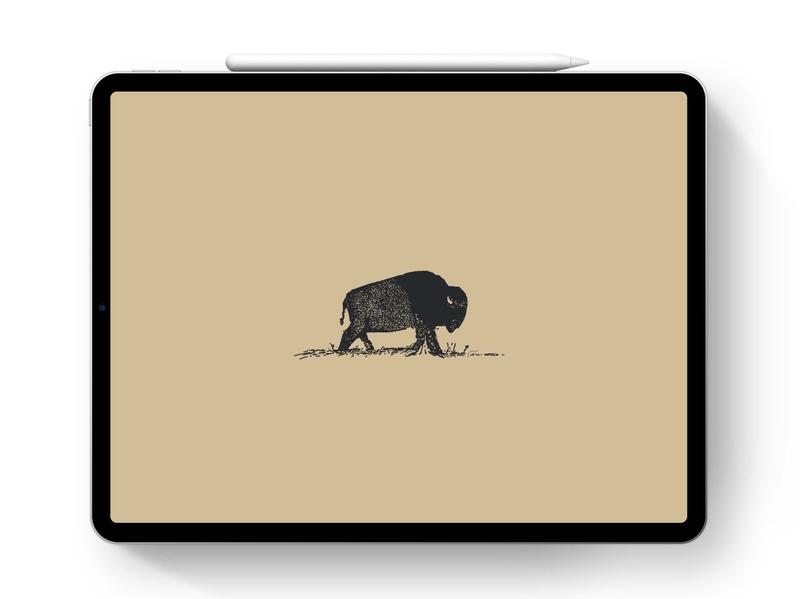Bison Sketch   iPad Pro