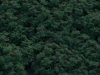 Forest render test