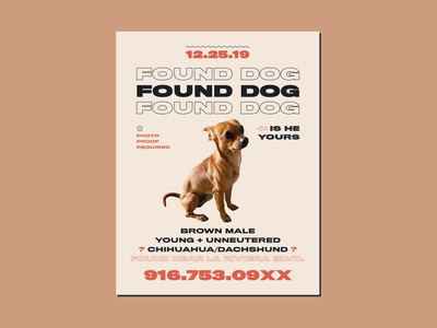 FOUND DOG FLYER