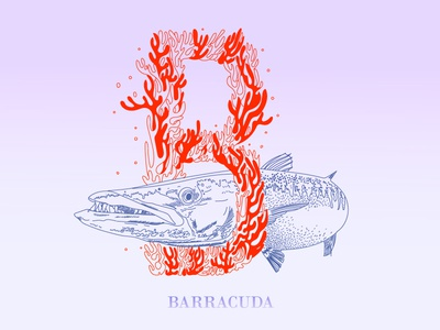 B is for barracuda